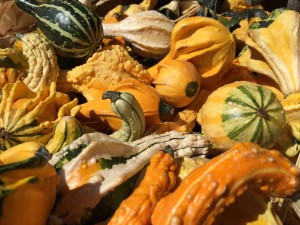 Francis gourds 1