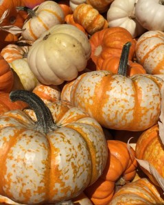 Francis gourds 2