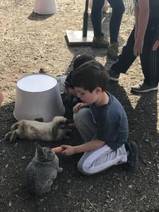 boy feeding rabbit