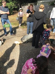 pig in petting zoo